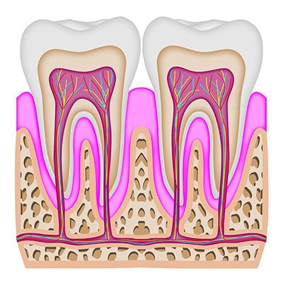 根管(歯の根)治療とは